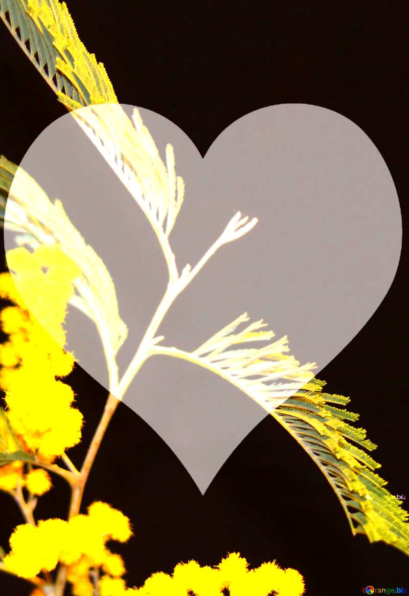 A black background with yellow flowers and a white heart. №964