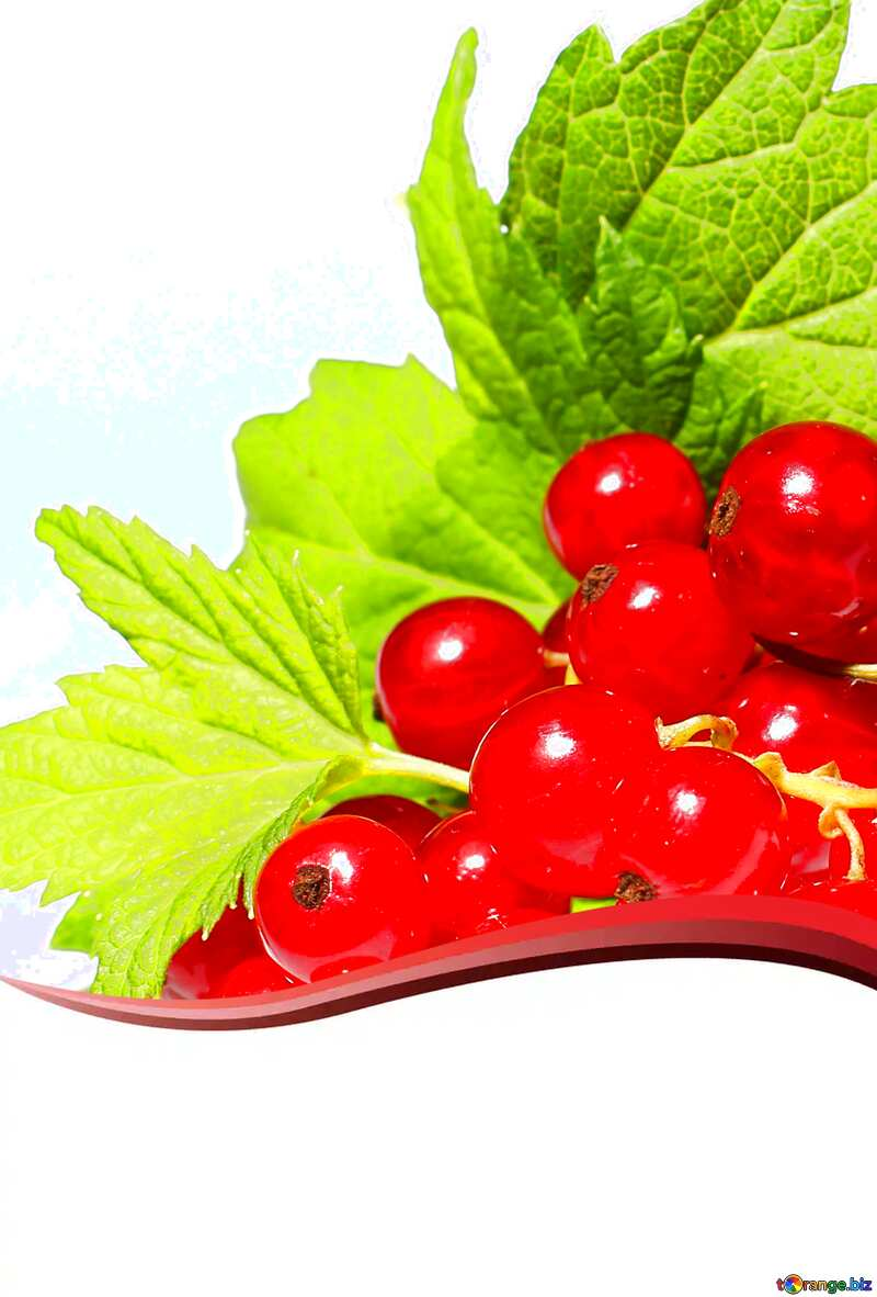 Red currant card №33229