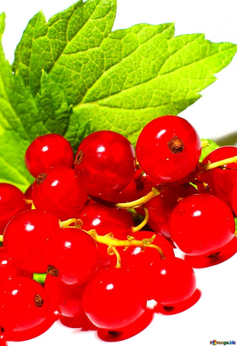 Red currant №33229