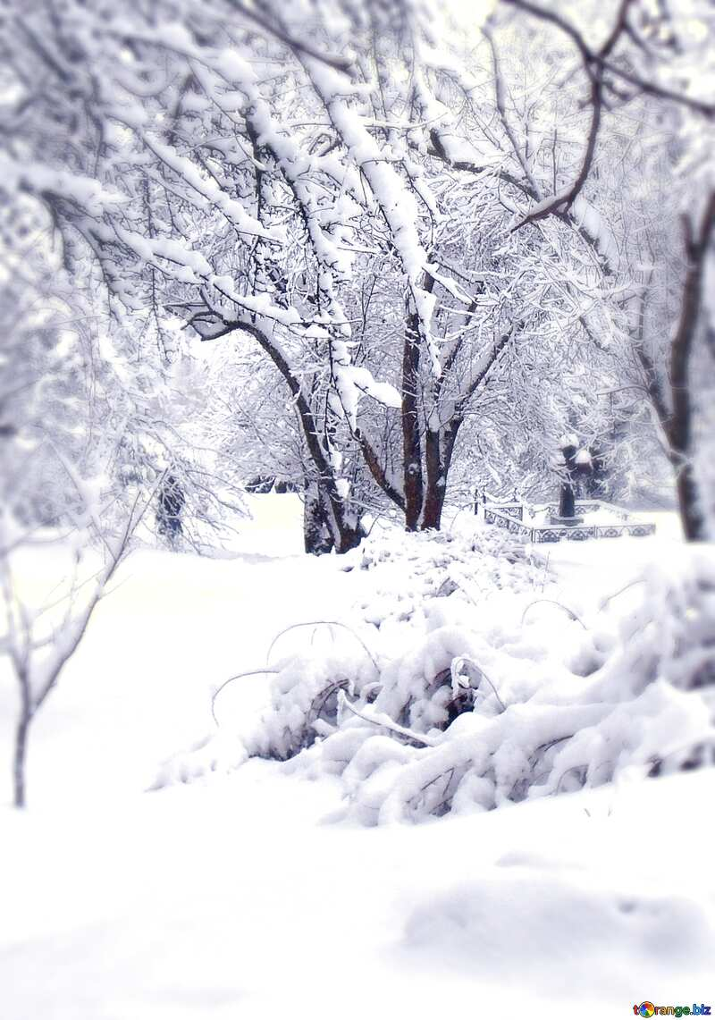 snow trees paysage №10567