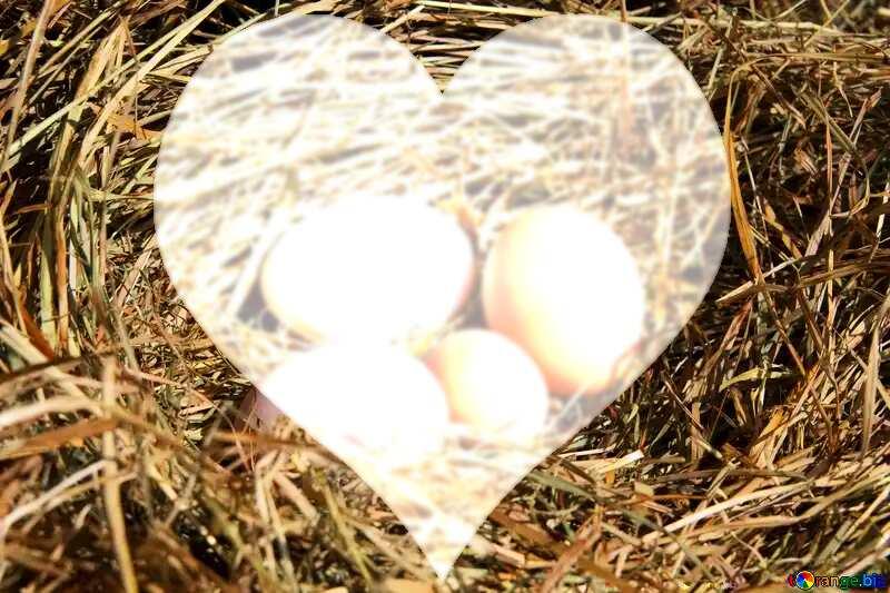 Eggs in the nest love background heart №1069