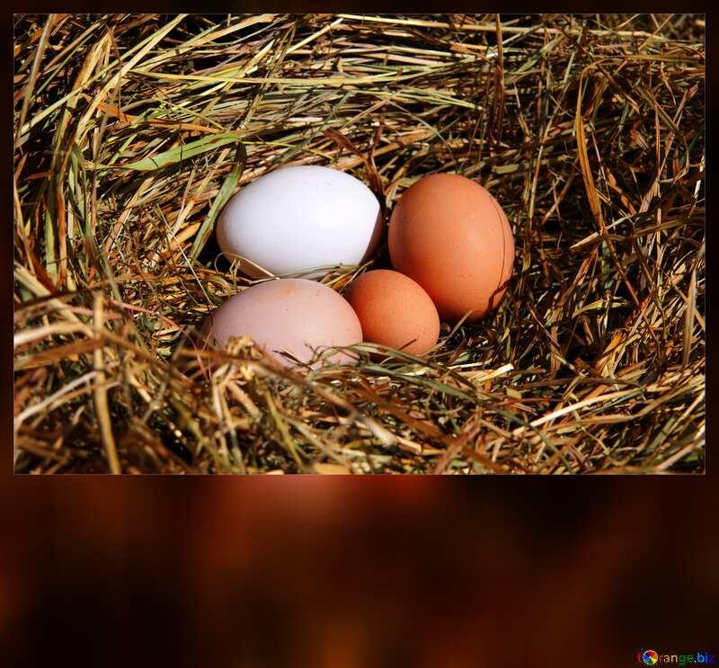eggs nest blank card №1069