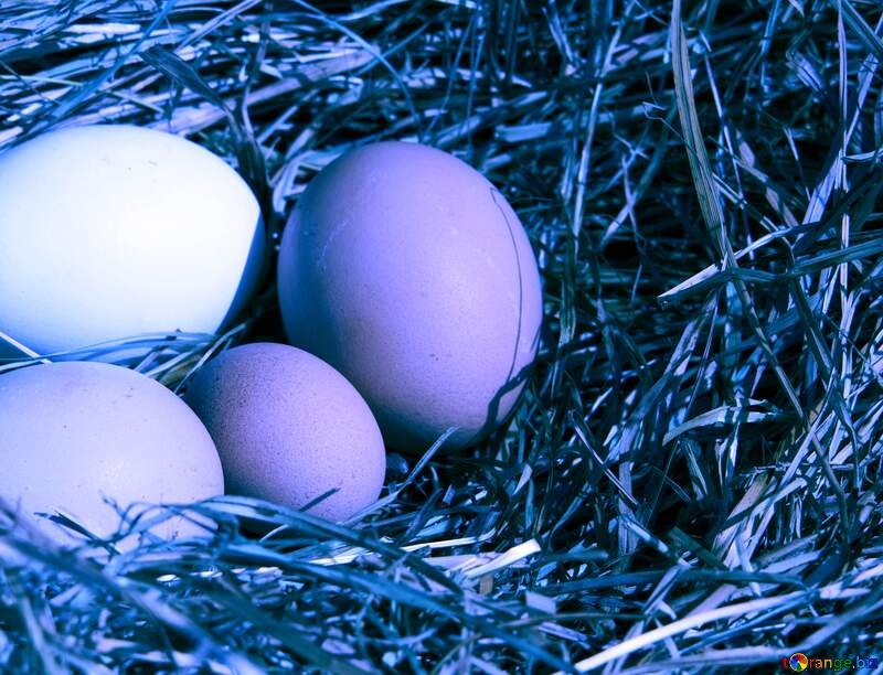 Blue Eggs in the nest №1069