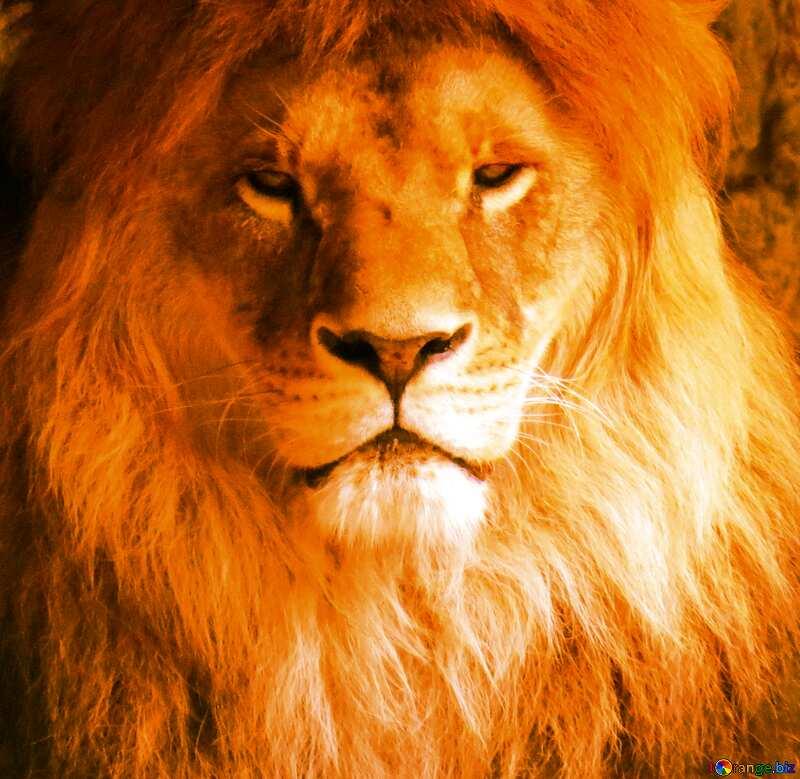 Card lion portrait №44974