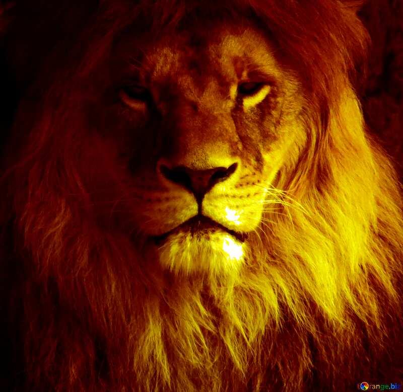 lion portrait №44974