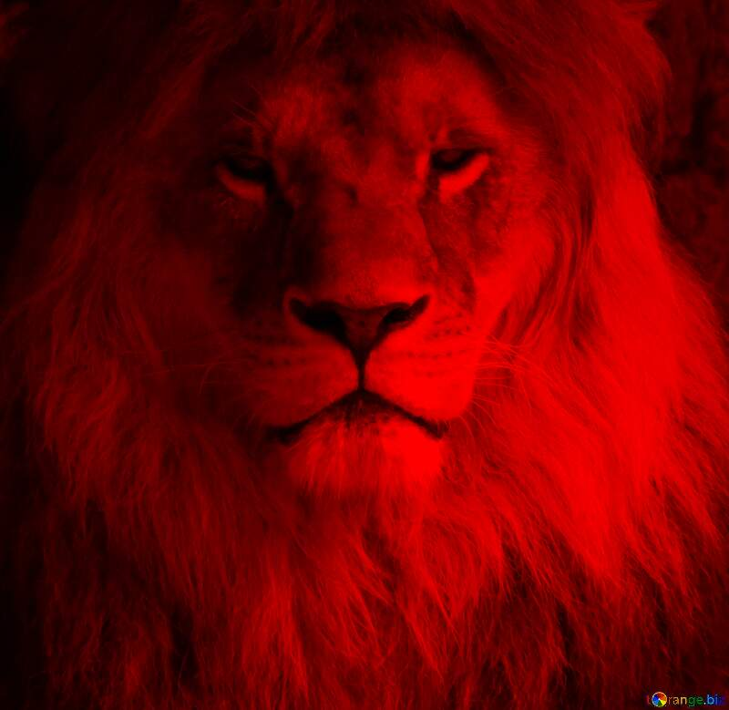 Red lion portrait №44974