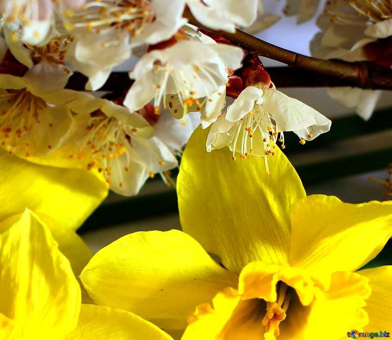 Spring Flower fragment background №29973