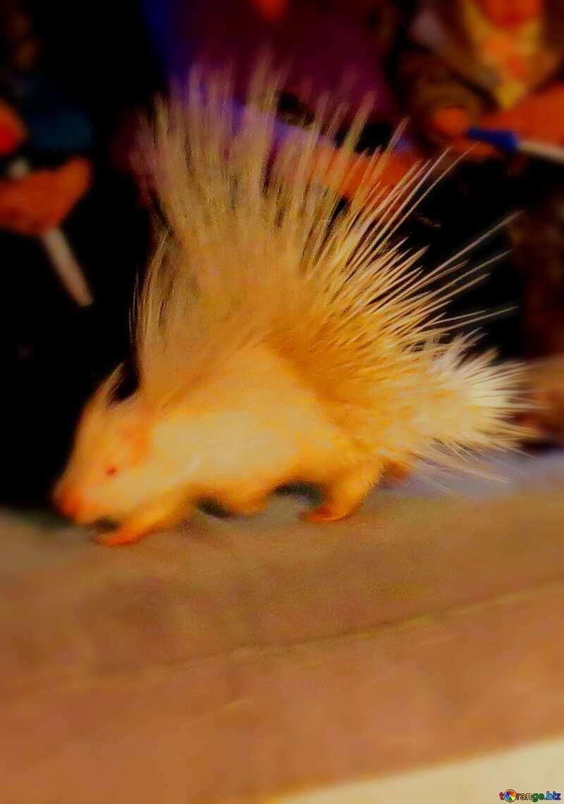 Circus porcupines blur frame №15754