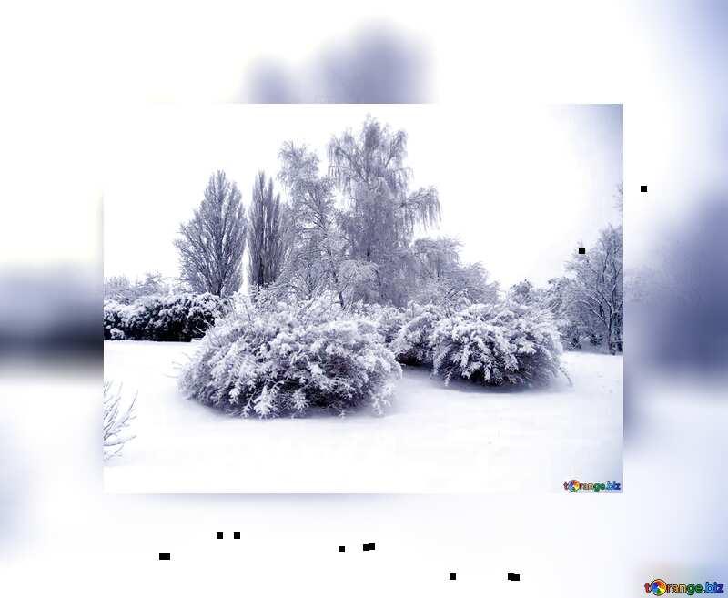 trees snow bushes fuzzy border №10521