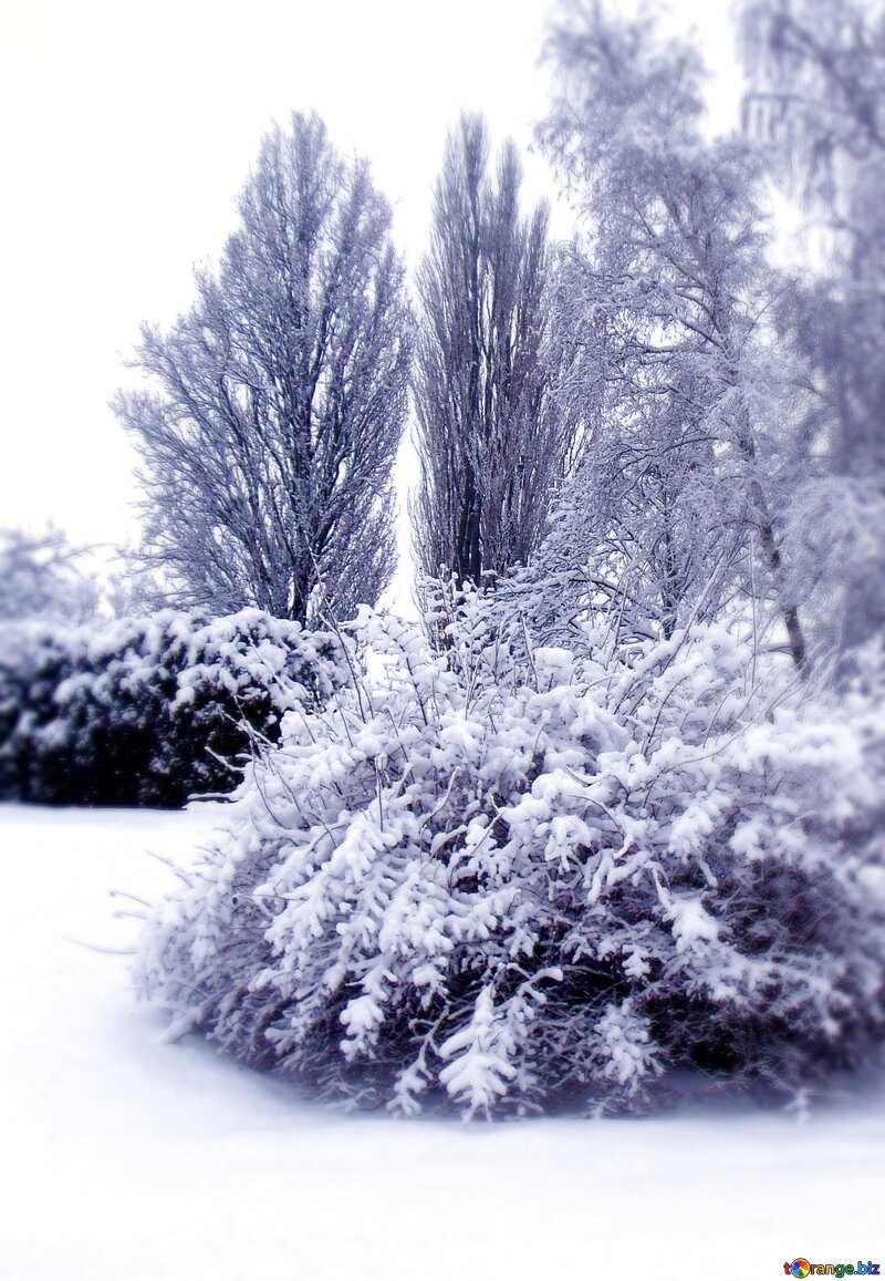 Arboles llenos de nieve №10521