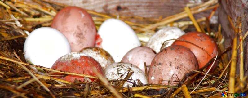 Обложка. Домашние куриные яйца в курятнике. №773