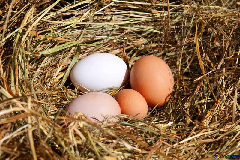 nest 4 eggs №1069