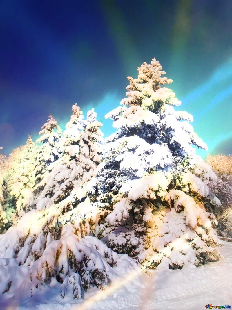 Christmas tree №10550