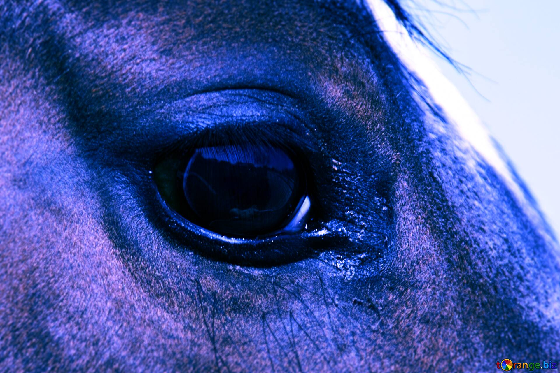 Download Free Picture The Eye Blue Horse On Cc By License Free Image Stock Torange Biz Fx 137642