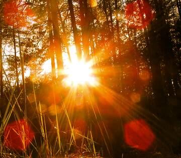 Sun in foreast