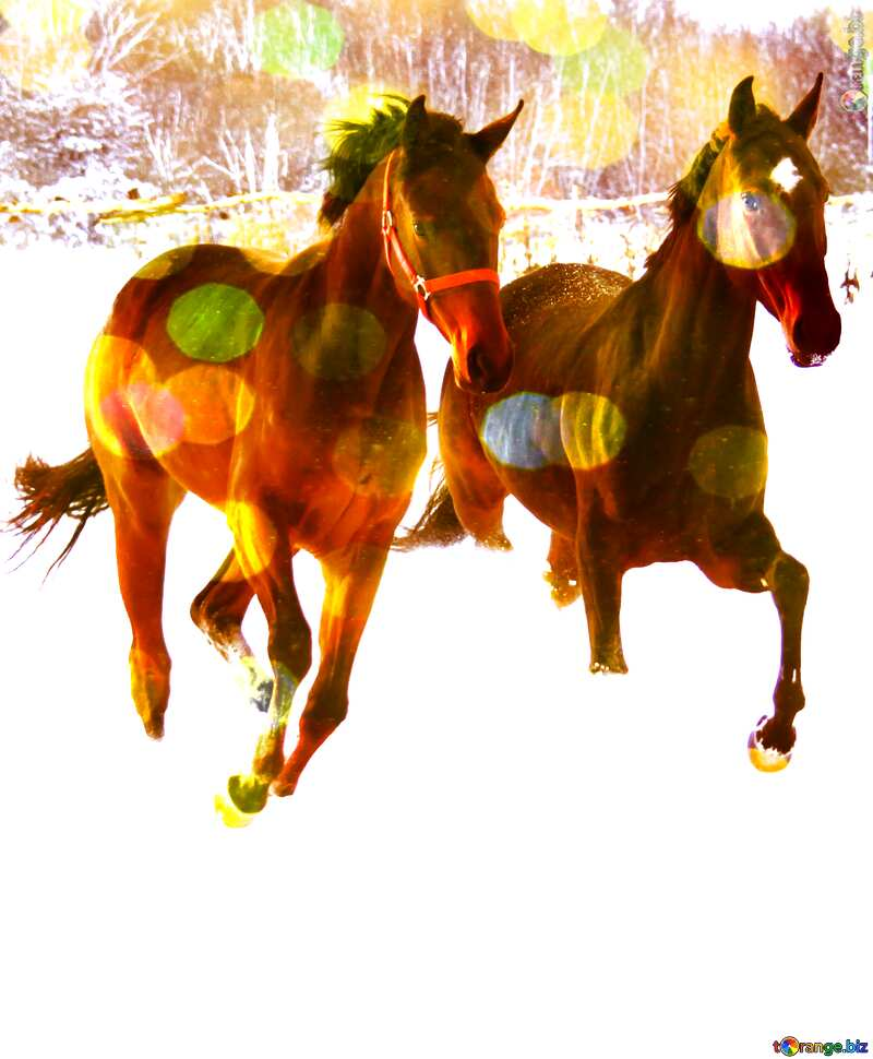 Two horses on  snow     №3981