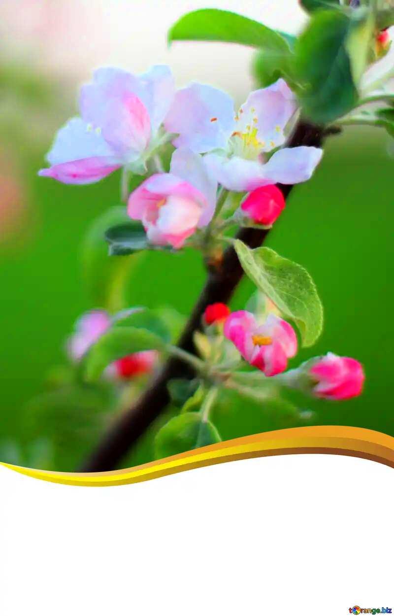 Apple-tree flower curved border blank card №32431
