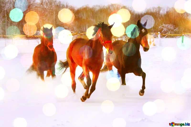 Three horses on snow     №3981