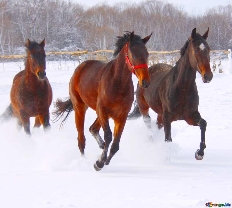 Three horses on the snow     №3981
