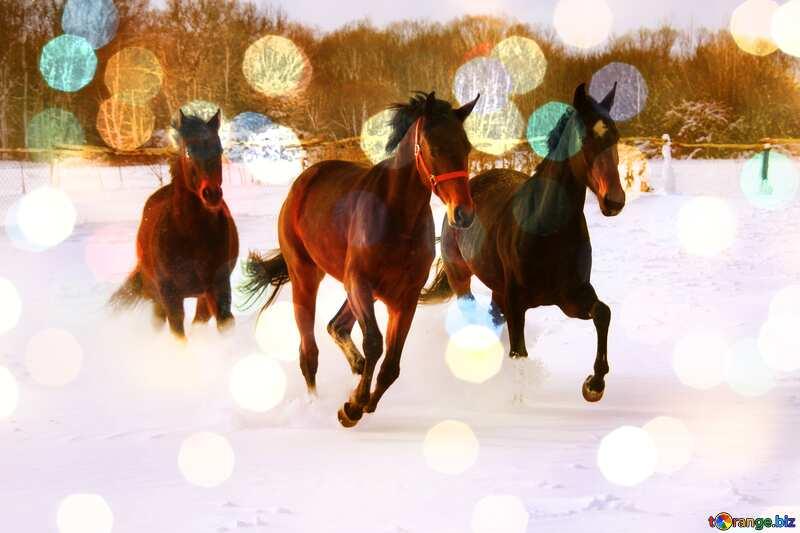 Three horses  snow  bokeh №3981
