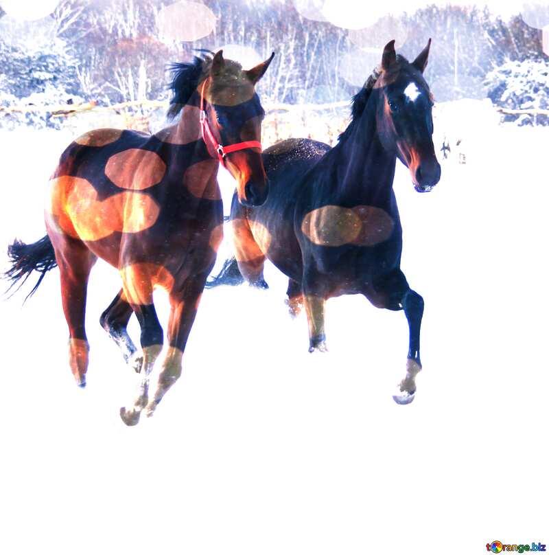 Two horses  snow    №3981