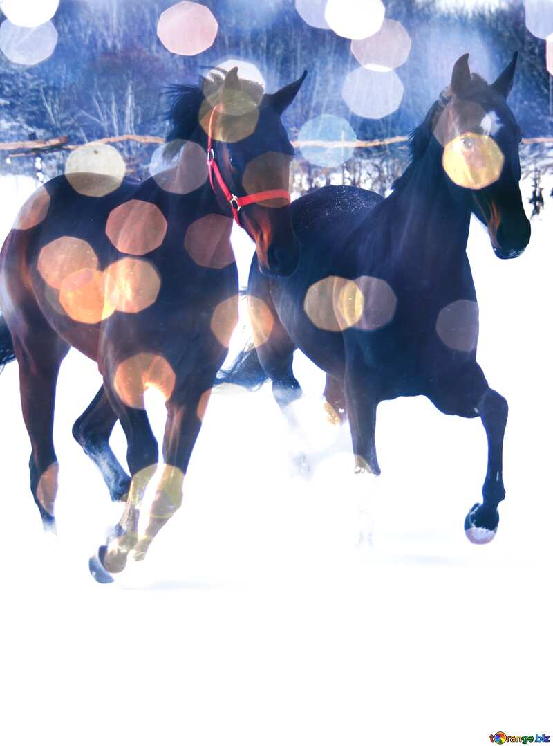 Two horses in the snow     №3981