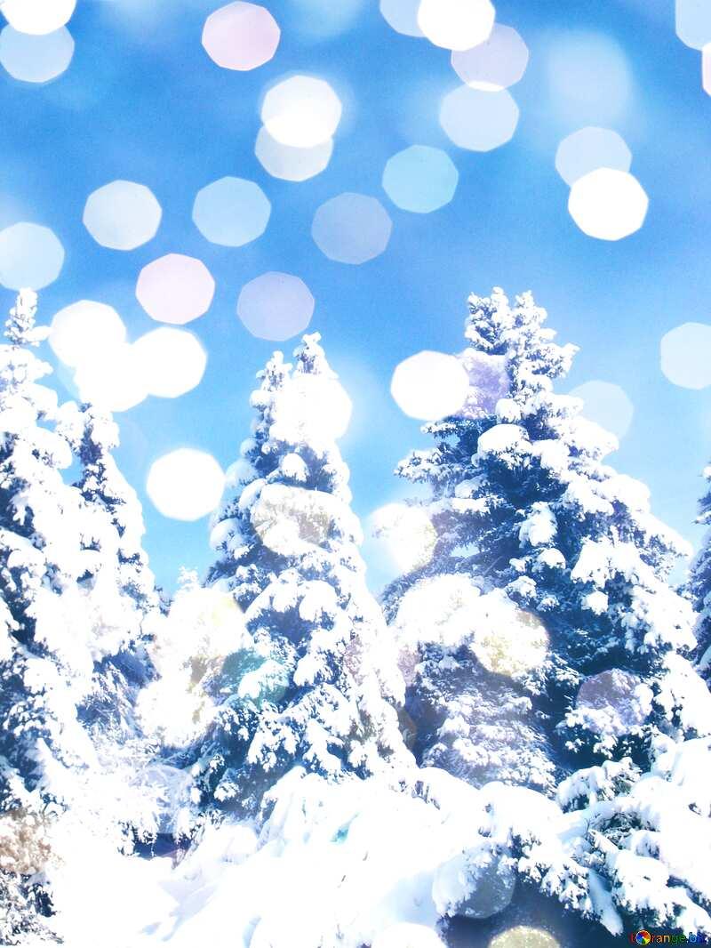 Cone Tree  Snow  sun      №10576