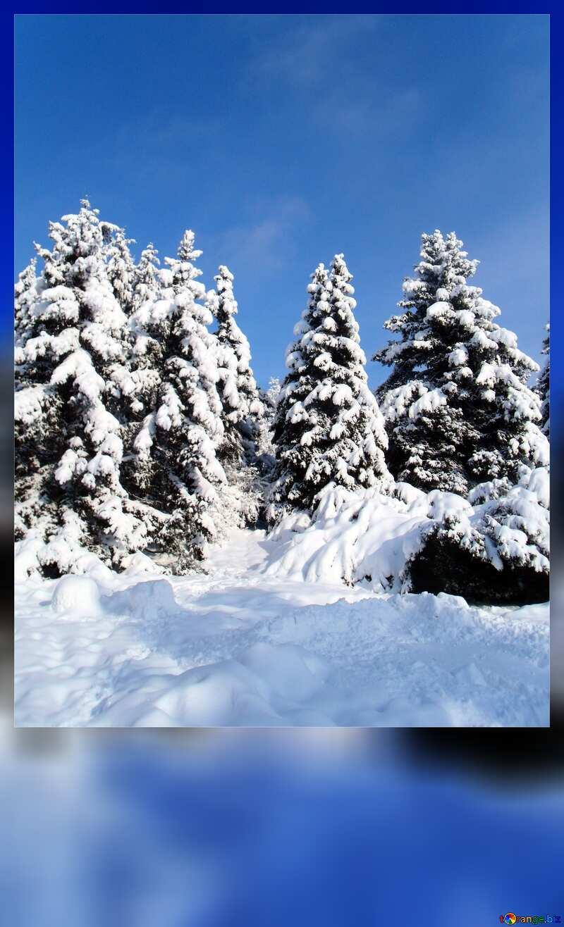 Snow forest blank card №10576