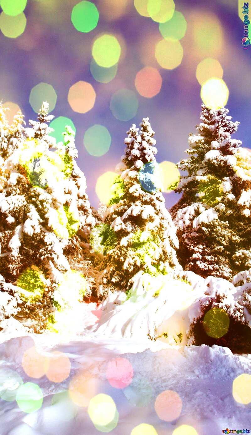 Fir Tree  Snow  sun      №10576