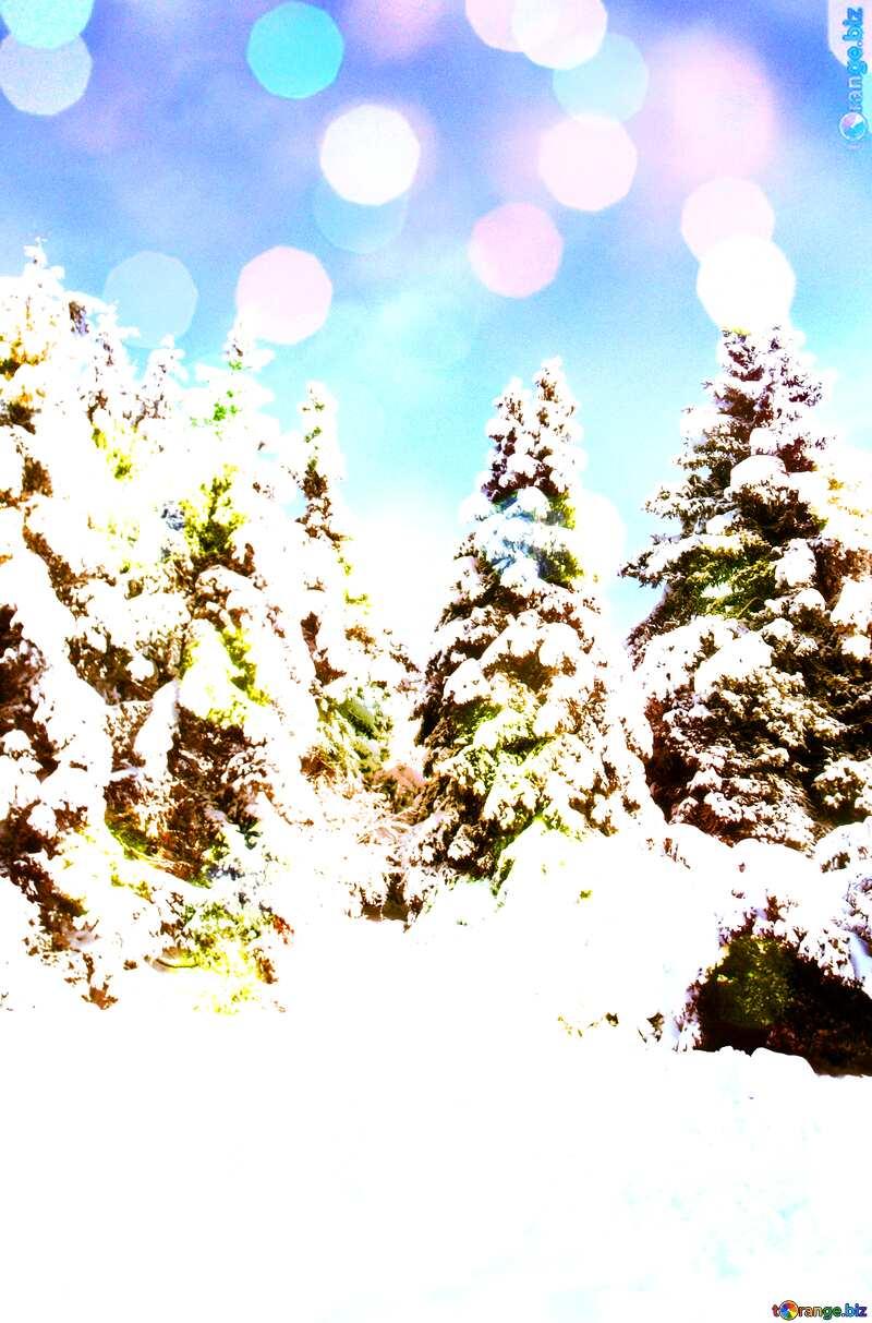 Forest fir Tree  Snow  sun      №10576