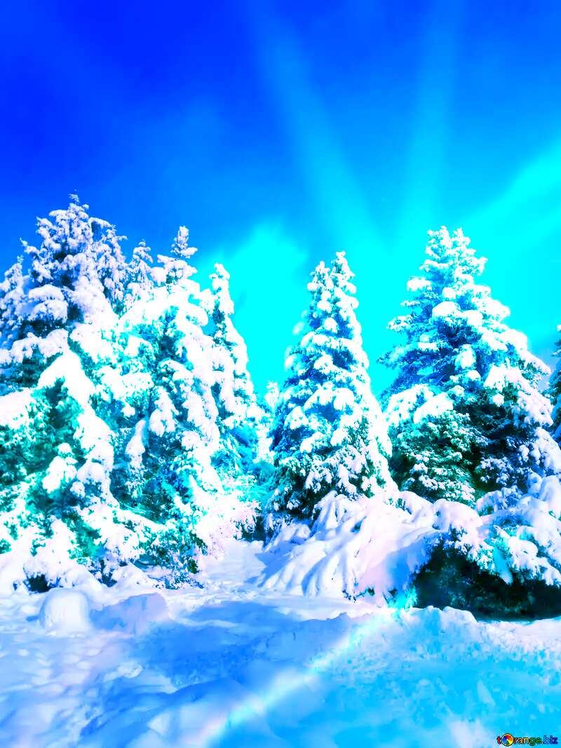 Forest Tree  Snow  sun      №10576
