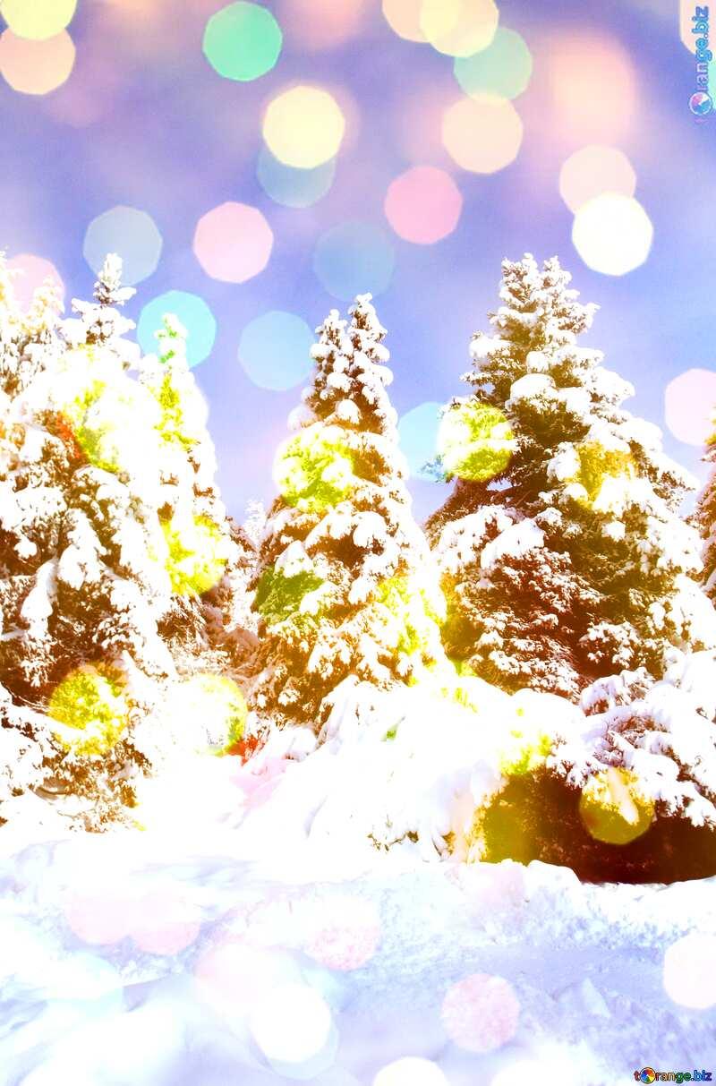 Pine Tree  Snow  sun      №10576