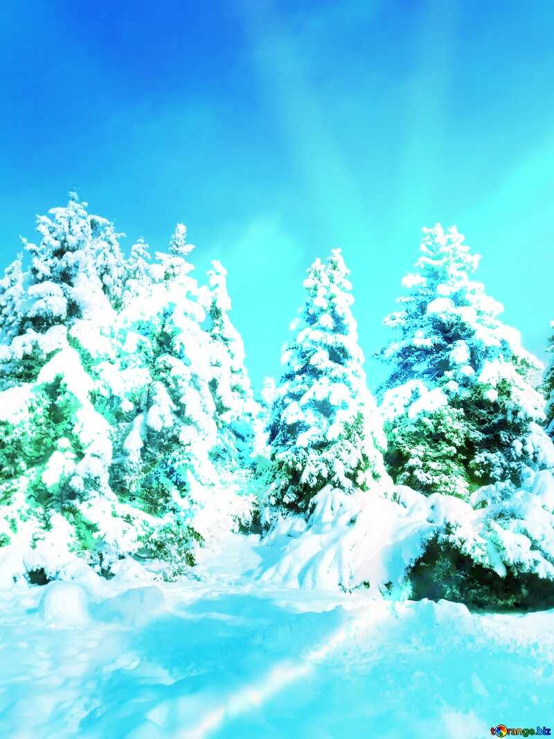 Winter Forest Snow Fir Tree Sun  №10576