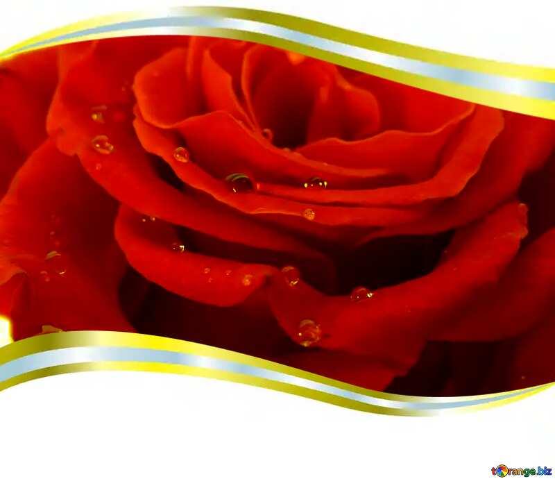 rose drops №17124