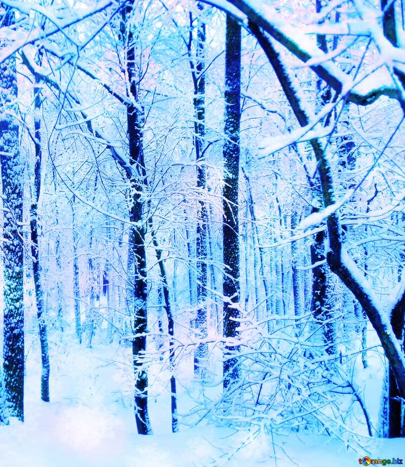 Winter  blue snowy Forest №10505