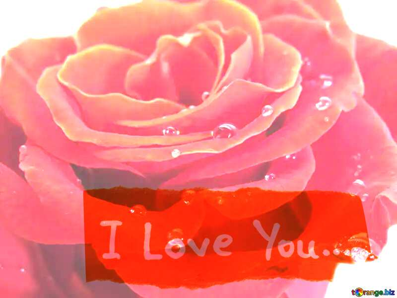 A rose with drops I love you write №17124