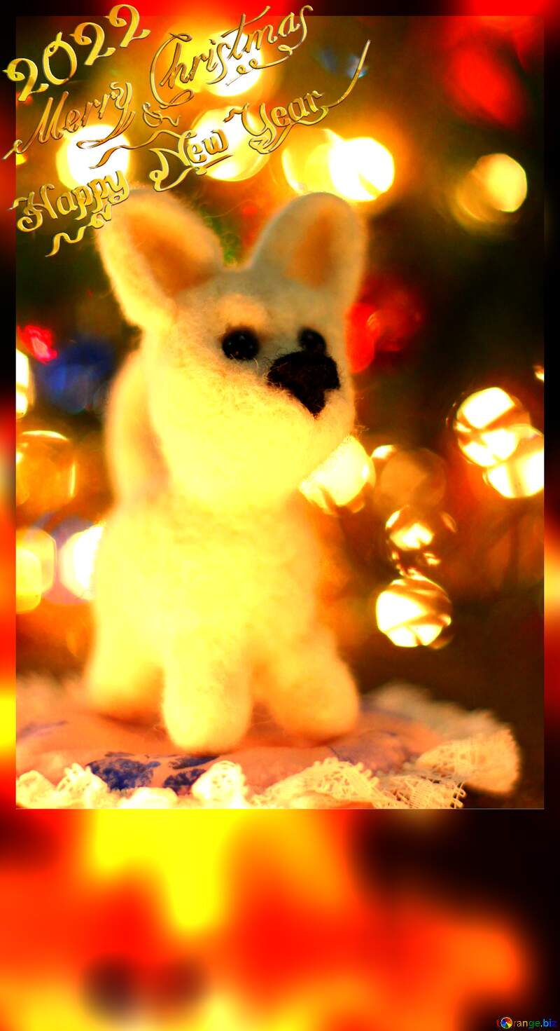 Happy new year 2021  husky dog. Copyspace frame greetings background. №49641