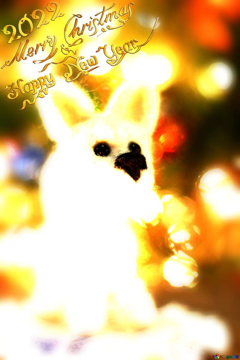 Happy new year 2021  white husky dog. Copyspace congratulations. №49641