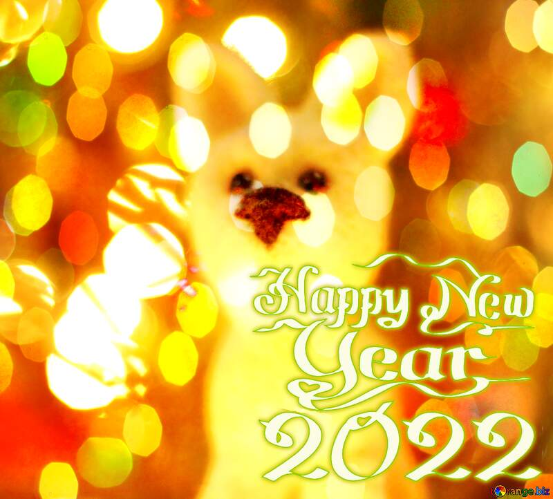 Happy new year 2021  husky dog. Christmas greetings background. №49645