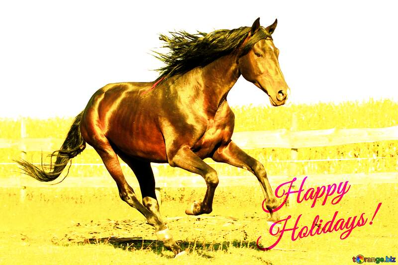 Horse Happy Holidays №36664