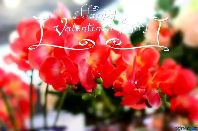 flowers for valentines №47105