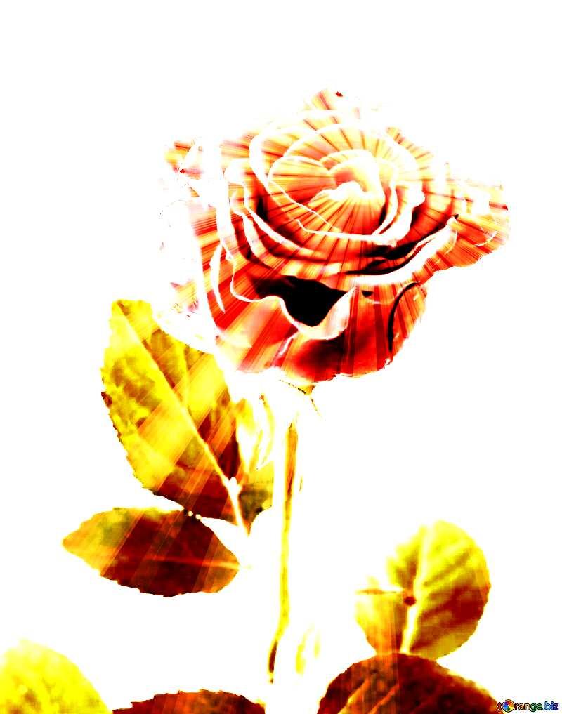 Beautiful rose sunlight rays №17040