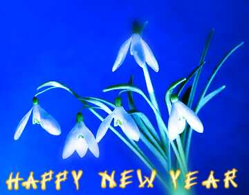 The effect of the mirror. The effect of macro blurring the top and bottom. Card with text Happy New Year.