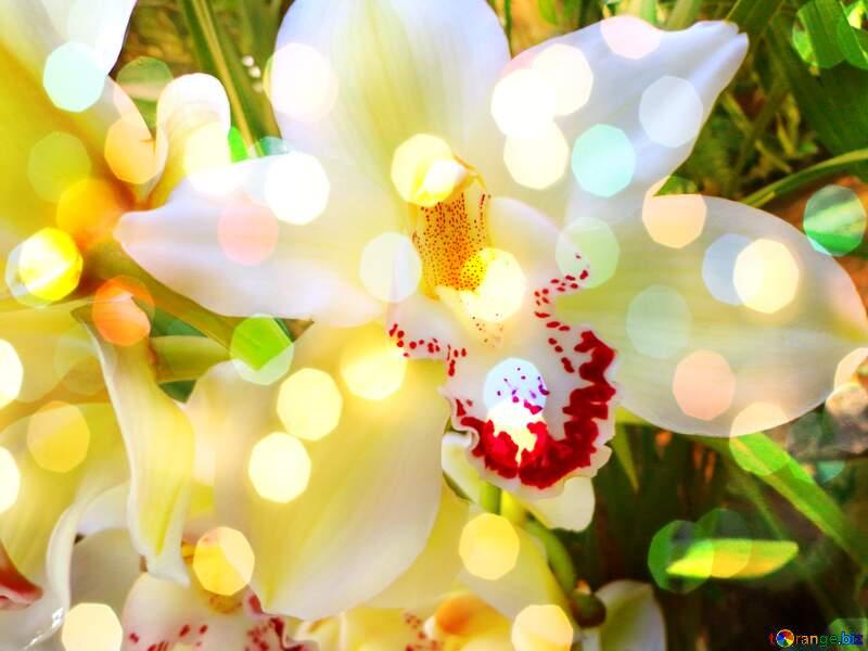 орхидея номер фотобанках