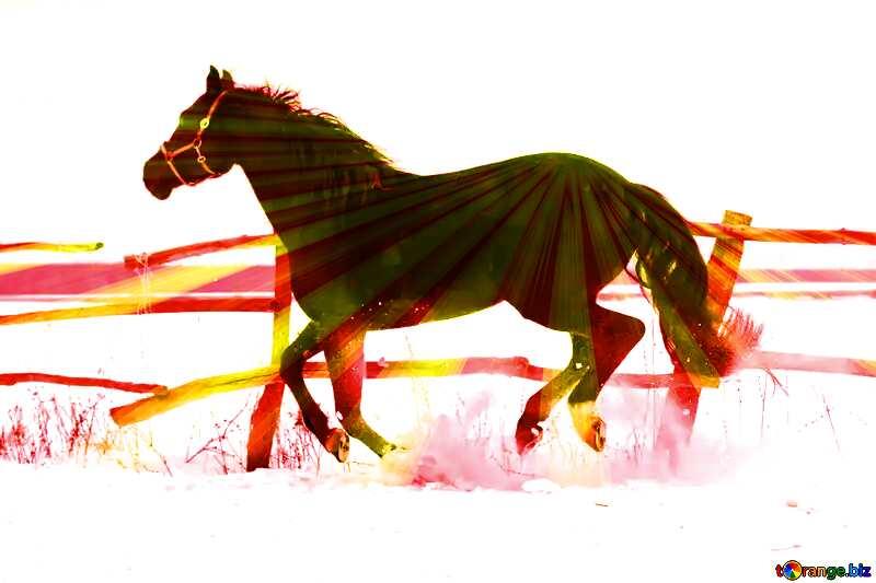un cheval  qui cours sur de la neige №18189