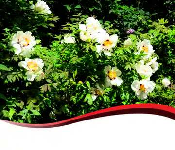 The effect of contrast. Very Vivid Colours. Red ribbon border.