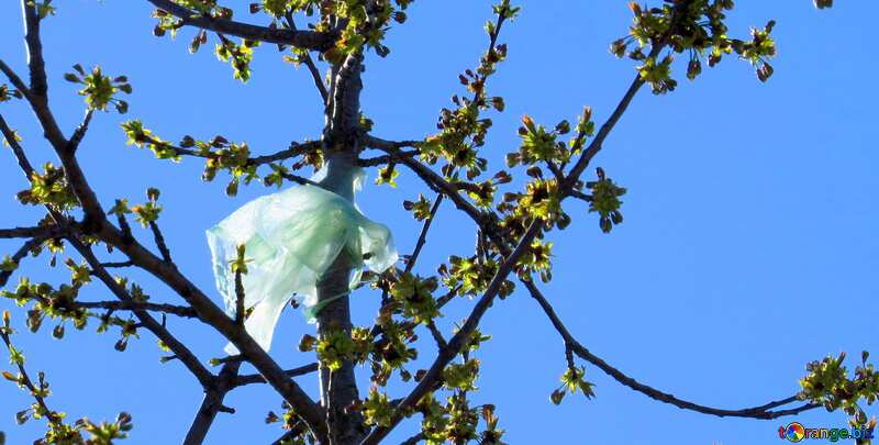 Plastic bag in tree №23975