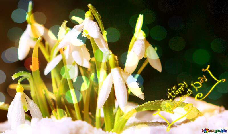 Spring backgrounds happy valentines day  background with  snowdrops flowers №38265