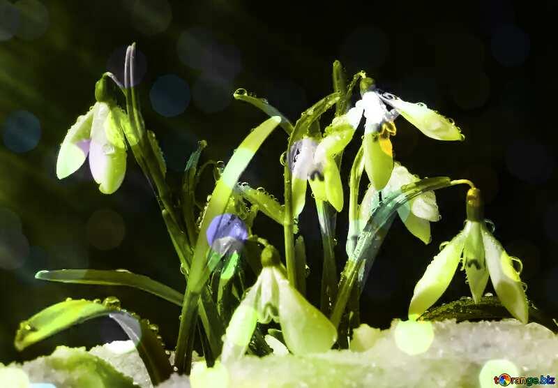 clip seems like lily flower overlay bokeh lights №38361