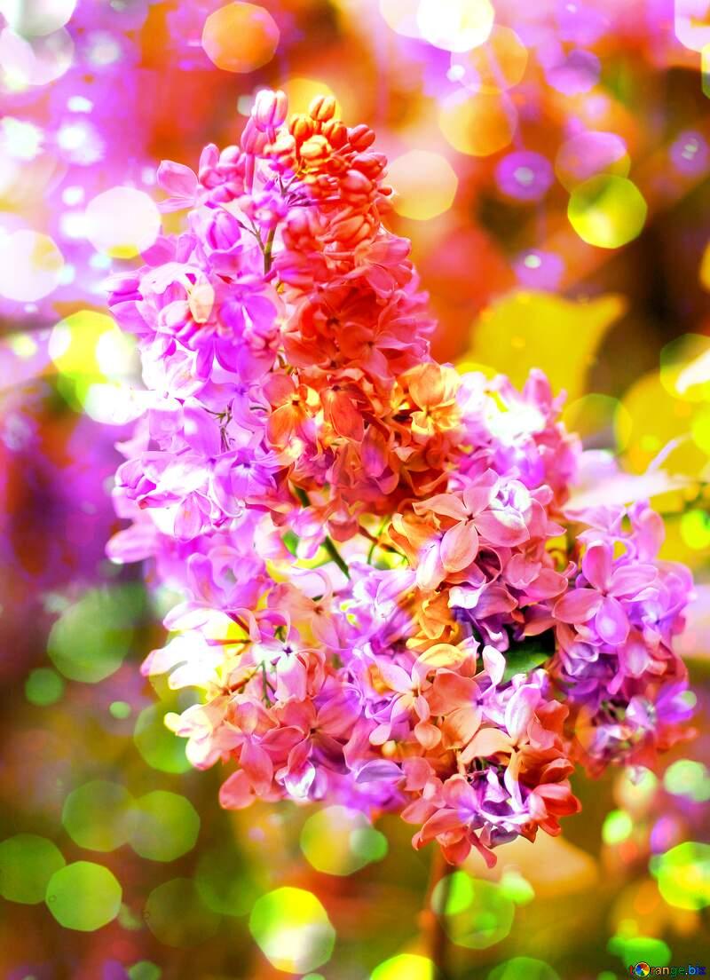 fiori №37458